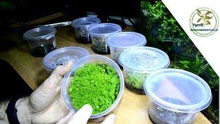 Hodowla roślin akwariowych dla każdego