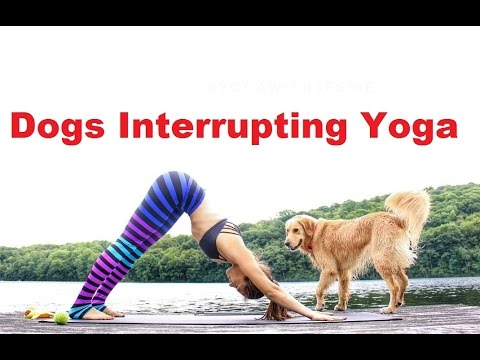 "♥""Dogs Interrupting Yoga Compilation"" 