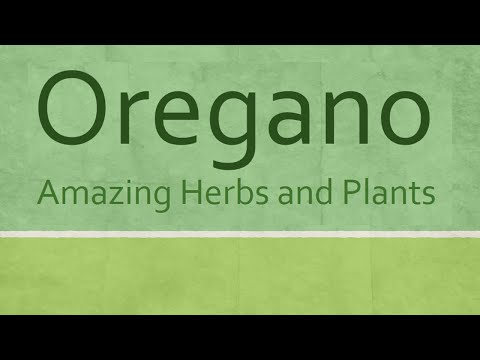 Video Oregano Health benefits - Amazing Herbs and Plants - Oregano nutrition facts