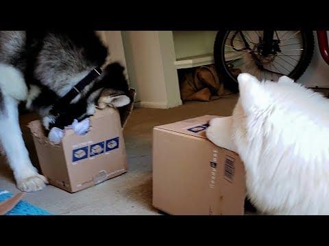 Mailtime With Tonka, Monroe & Abryella