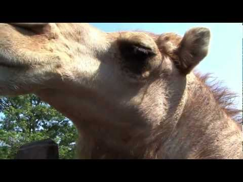 Video Fun places to visit in Long Island - Come and visit the best fun place on Long Island