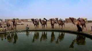 Togetherness on a Camel Safari