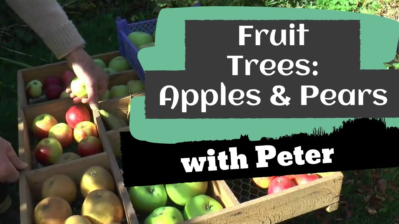 Fruit Trees: Apples and Pears