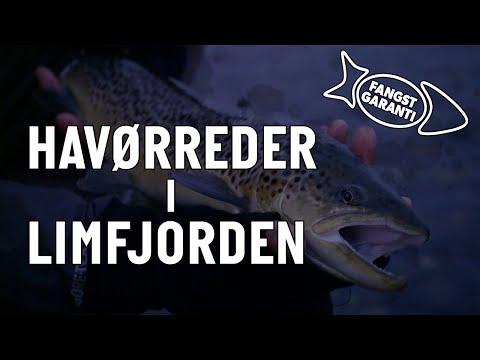 Havørredfiskeri i Limfjorden med Fangstgaranti