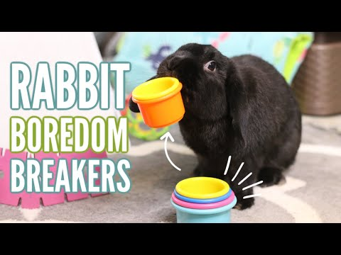 , title : 'How to keep your rabbit BUSY