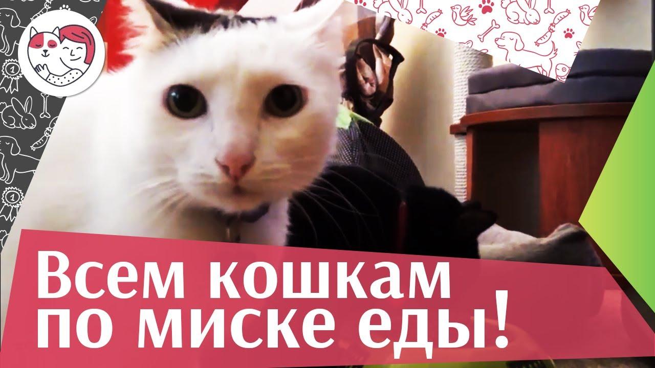 Благотворительная акция «Всем кошкам по миске корма» от фонда «Вторая жизнь» на ilikepet