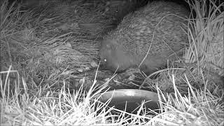Wildlife Trail Camera - 26.3.2019
