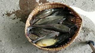 Câu Cá Như Vầy Sướng Sướng Sướng l Fish Hunting