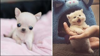 AWW CUTE BABY ANIMALS Videos Compilation cutest moment of the animals - Soo Cute! #31