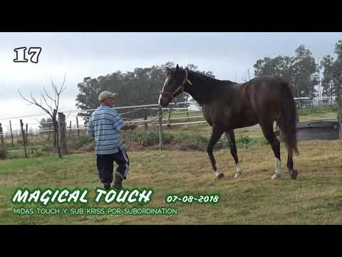 Lote MAGICAL TOUCH