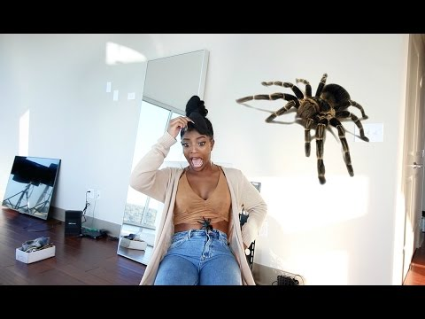 TERRIFYING REAL TARANTULA PRANK!!