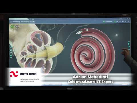 Dimensiunea penisului în circumferință