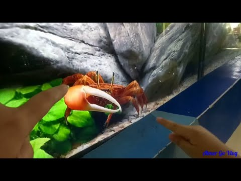 Vietnamese gamot mula sa mga worm