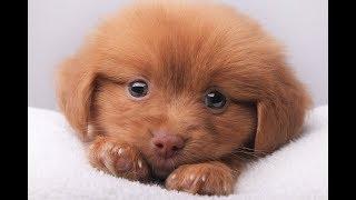 Веселые собаки и милые щенки | Подборка видео приколов с собаками №2