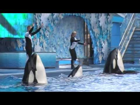 Sea World Shamu Show with Dawn Brancheau- 3 days before she was killed by an orca!!!