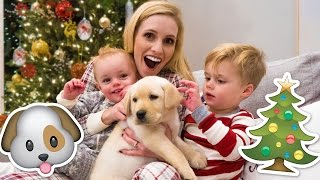 NEW PUPPY HOLIDAY SURPRISE! 🐶