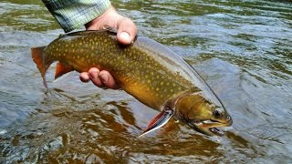 Mattawa Fly Fishing   Ontario