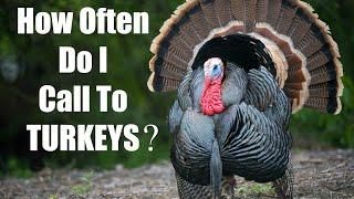 How Often to Call to Turkeys - Turkey Hunting Tips