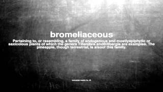 What does bromeliaceous mean
