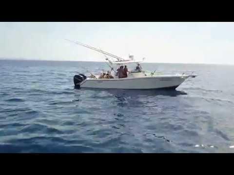 Boat - Pursuit 3070CC
