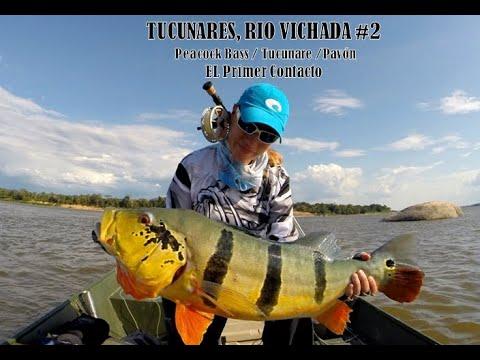 Tucunares, Rio Vichada #2 - El Primer Contacto
