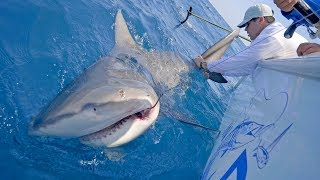 Searching For Wahoo And Monster Shark Fishing With Frogg Toggs   4K
