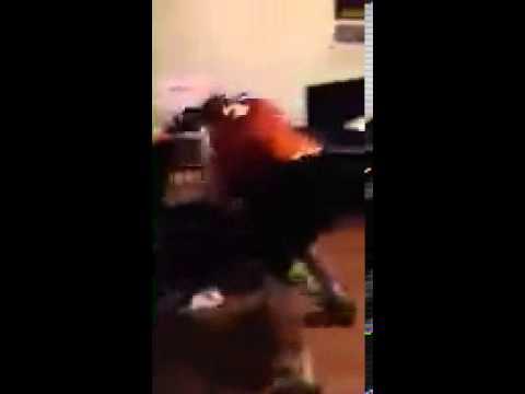 Student at UT attacks Nigerian roommate