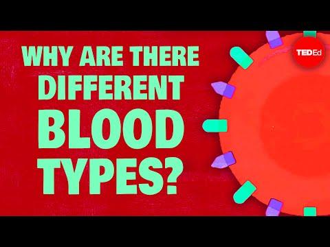 כל מה שרציתם לדעת על סוגי הדם השונים ועל חשיבותם