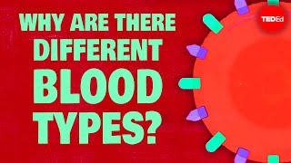Natalie S. Hodge & Addison Anderson - Why Do Blood Types Matter?