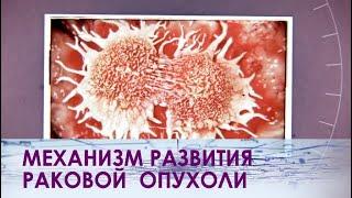 Как возникает и развивается рак?