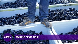 How is Pinot Noir made? From the sorting table to the fermenting tank
