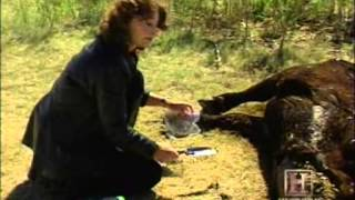 UFO Files: Cattle Mutilations