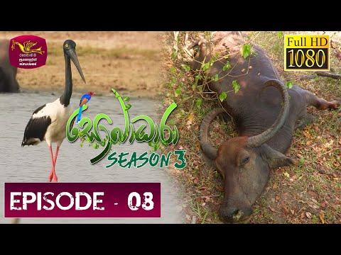 Sobadhara Rupavahini | 2019-05-03 | Black-necked stork