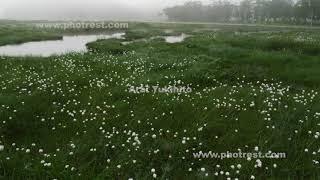 尾瀬ヶ原の動画素材, 4K写真素材