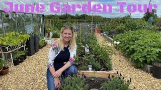 Garden Tour At Gwenyn Gruffydd In June. Vegetable Gardening In Wales UK.
