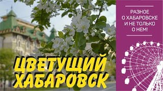 Цветущий Хабаровск