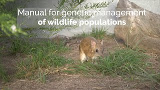 Manual for genetic management of wildlife populations