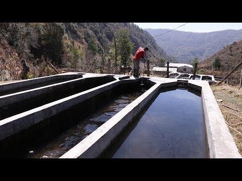 """, title : '""""REMBO TROUT FISH""""How to make a Trout  Farming Agree Culture In Nepal Farming 2019"""