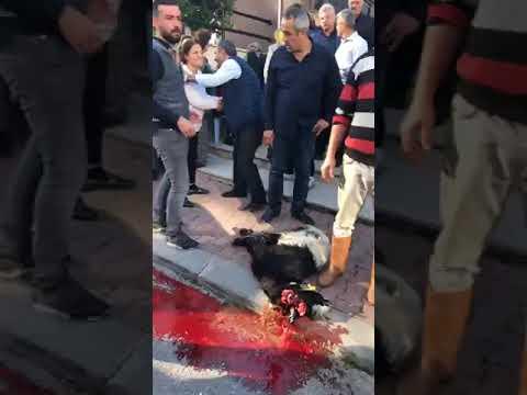 Mehmet Ali Alkan tahliye oldu