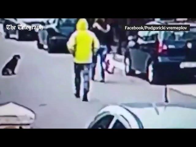 كلب ينقذ سيدة من لص حاول سرقتها