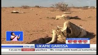 Wakaazi wa Garissa wahofia kufa kwa mifugo yao kutokana na ukame