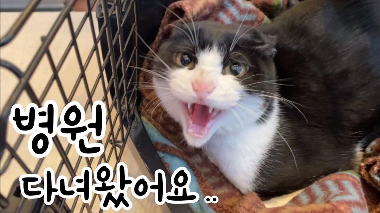 동물 병원에 다녀온 고양이의 결과는...?