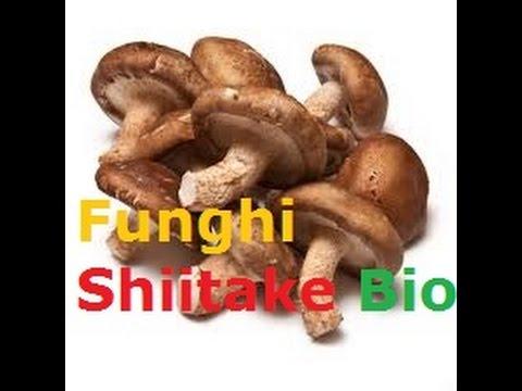 Come si libererà da un fungo di unghie per mezzo di aceto