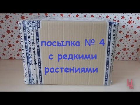 распаковка посылки № 4 с редкими растениями   комнатные растения почтой   пополнение коллекции