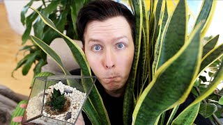 A Tour Of My Plants! (living And Dead)