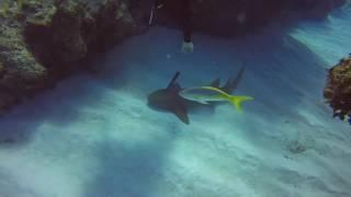 Дайвер спас акулу...