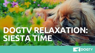 DOGTV Relaxation:  Siesta Time