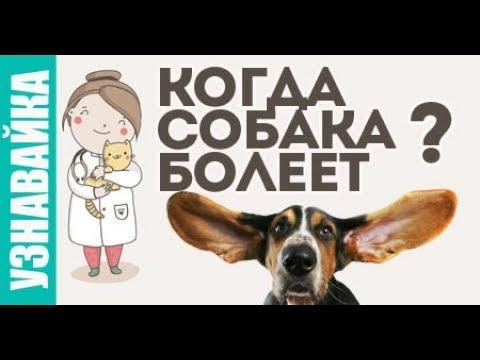 Когда собака болеет, что делать, признаки. Узнавайка