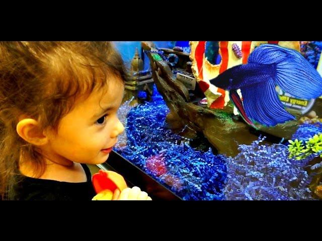 PET STORE STRUGGLE: NEW FISH TANK
