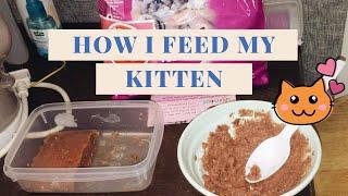 HOW I FEED MY KITTEN | Whiskas Junior
